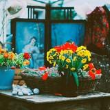Gardenia Shevardnadze