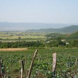 ბაბანეური - ღვინის ტური