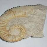 გეოლოგია-პალეონტოლოგიის მუზეუმი