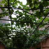 რაინერის პიცერია და ლუდის ბაღში